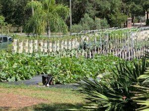 common ground hydroponics